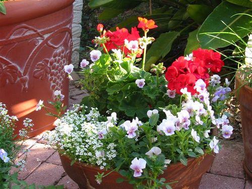 Blumenshalen